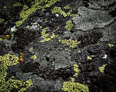 I Took A Lichen To It