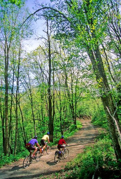B nc heintooga 4 - ORps - 72 dpi - Heintooga Trail in Great Smoky Mountains National Park in North Carolina