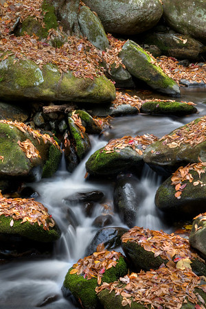 at Great Smoky Mountains National Park