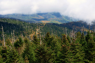 SmokyMountains072