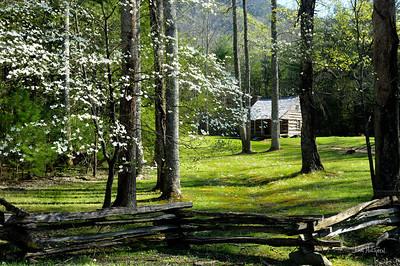 Carter Shields Cabin