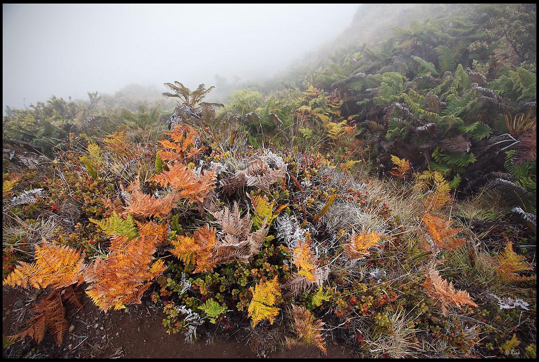 Colorful tropical ferns  Haleakala National Park, Maui, Hawaii