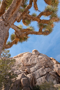 Joshua Tree National Park--Twentynine Palms, California