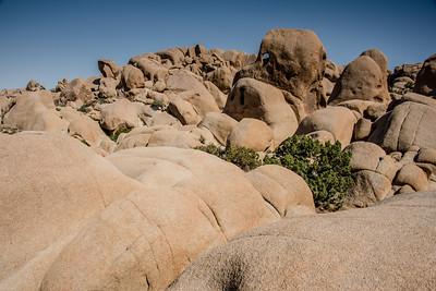 Skull Rock granite boulders in Joshua Tree National Park, April 2018.