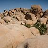 Skull Rock granite boulders in Joshua Tree National Park, April 2018.