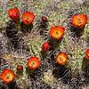 Cactus in Hidden Valley in  Joshua Tree National Park, April 2018.