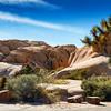 Joshua Tree As Site Host