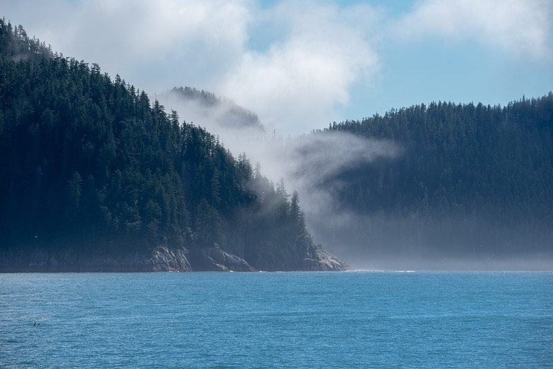 Fog in the Cove