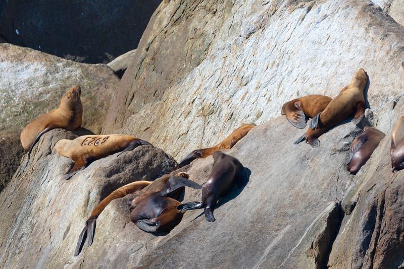 Sunning on the Rocks