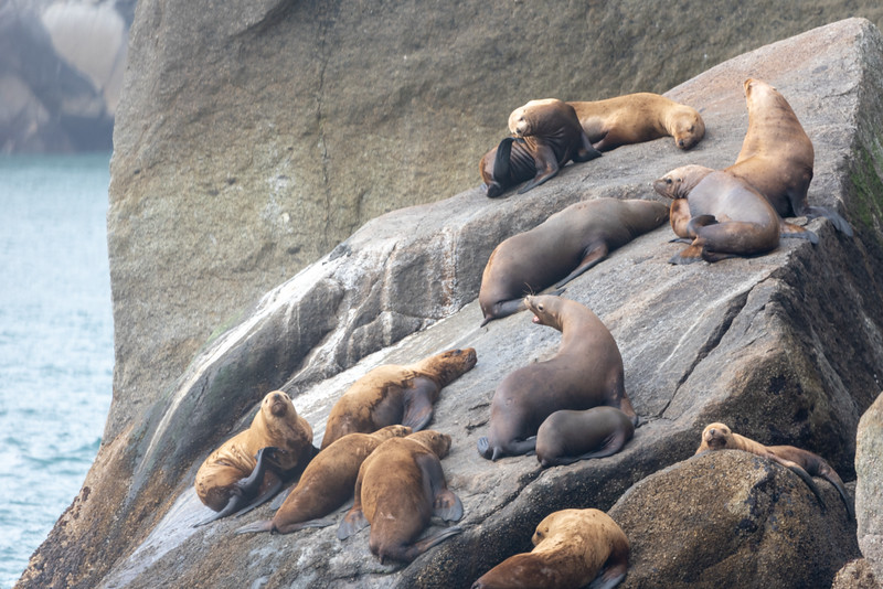 Seal Lions on the Cape