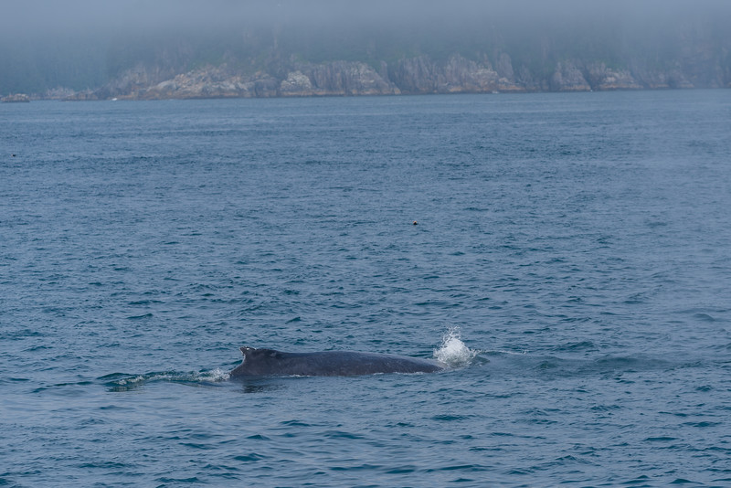 Humpback off the Peninsula