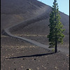 Trail leading to the top of Cinder Cone