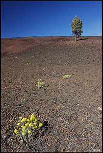 A tree and wildflowers near the crater