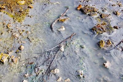 Sticks in the Mud
