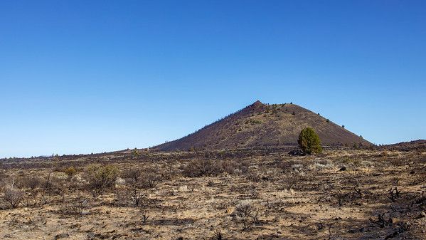 A Cinder Cone and Its Tree