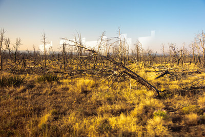 Forest Fire Damage, Mesa Verde National Park