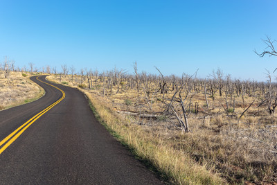 Forest Fire Damage, Mesa Verde