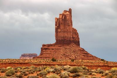 A Desert Standout
