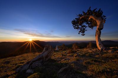 Lone Bristlecone Pine, Mount Evans, Colorado