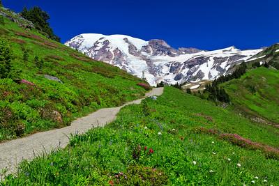 Alta Vista trail, Paradise, Mount Rainier