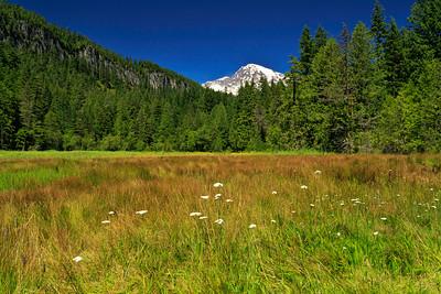 Longmire Meadow