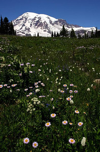 Carpets of Wildflowers, Paradise