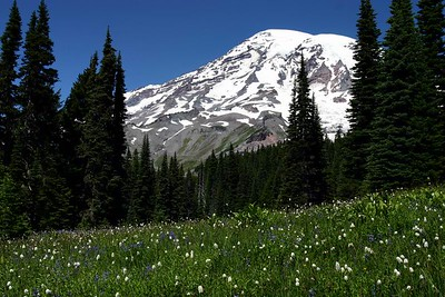 Mt. Rainier from the Avalanche Lily Trail