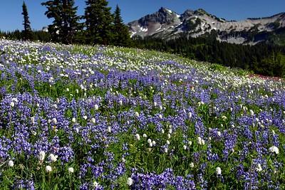 Carpets of Wildflowers, Paradise