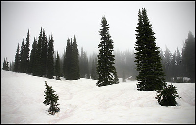 Mt. Rainier in winter