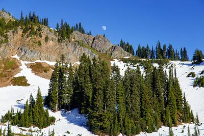 Pine Trees Celebrate the Moon Rise