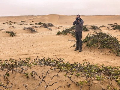 Taking pictures of the namaqua chameleon