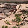 Near the edge of White Canyon