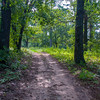 Walking in the woods towards McDougal Mound