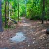 McDougal Mound Trail