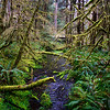 Hoh Rainforest in Olympic National Park, WA, April 2017.