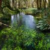 Quinault Rainforest, Olympic National Park, WA, April 2017.