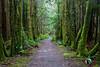 Trail Thru the Trees