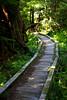 Trail to Flapjack Lakes