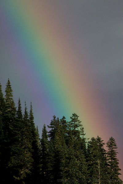 Rainbow in the Trees
