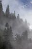 Valley Mist