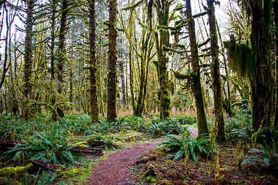 Quinault Valley, Olympic National Park, WA, December 2016.