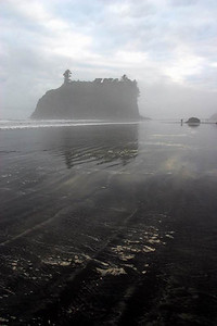 Ruby beach, on a foggy morning