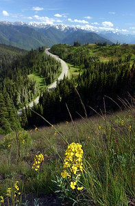 On Hurricane Ridge Trail