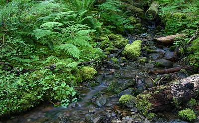 A creek in the rain forest