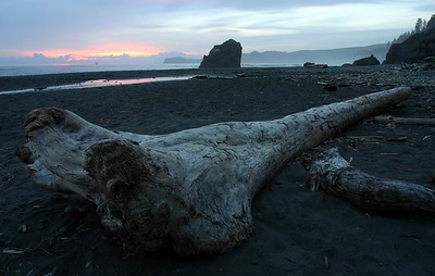 A Drifiting Log at Sunset
