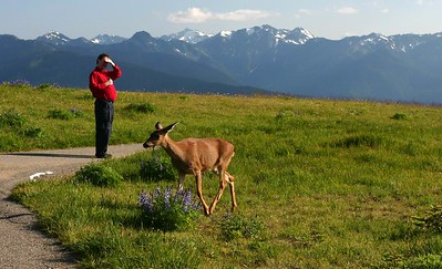 Deer and the tourist