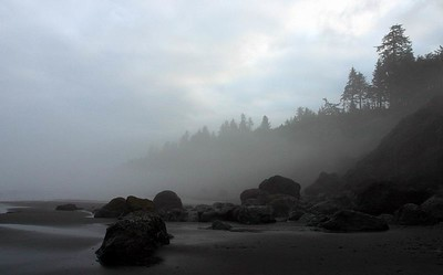 Misty shoreline, early morning