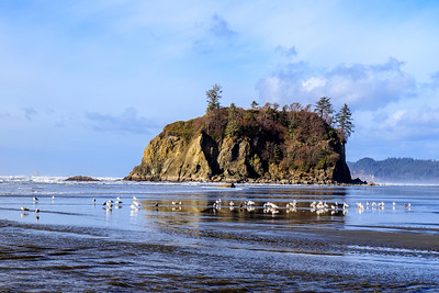Ruby Beach and Gulls