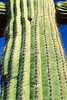 Organ Pipe Cactus Nat'l Monument in Arizona - 4 - 72 ppi