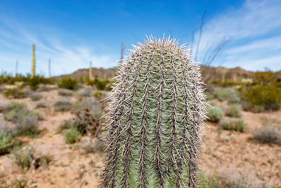 A Prickly Situation Out Arizona Way